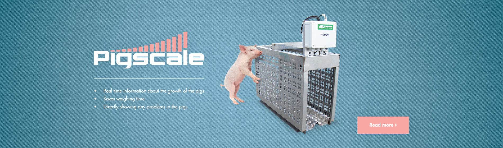 pigscale